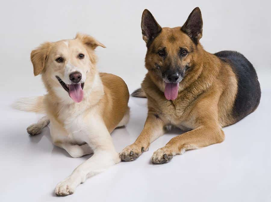 Pets on carpet
